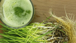How To Grow Your Own Wheatgrass