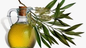 5 Health Benefits from Tea Tree Oil