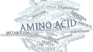 Meet the Amino's: Amino Acids and Their Roles in Health