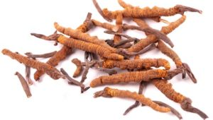 Cordyceps: Exotic Source of Health Benefits
