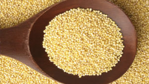 What Is Millet?