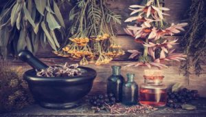 The Purity, Integrity & Potency of Gaia Herbs Webinar