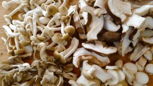 5 Mushrooms to Boost Immunity