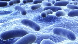Probiotics Promote Strong Gut and Immune System