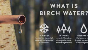 Is Birch Water Worth A Try? Here's What You Need To Know