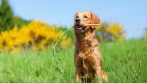 7 Best Vegetables for Dogs