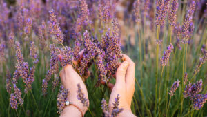 5 Soothing Uses for Lavender Oil
