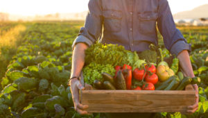 What Is Organic Eating?