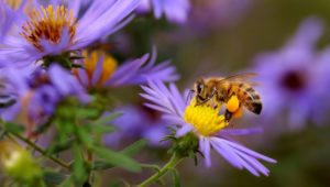 Why Bees Are Important to Everything, Especially Your Healthy Eating Habits